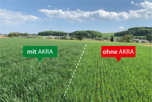 -Positive effects of multi-year AKRA Start Applications