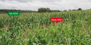 -Zone de pulvérisation sans AKRA Azotobacter bactéries fixatrices d′azote