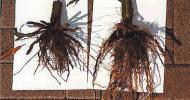 Gorgeous Root Development-