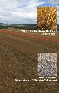 Test area with AKRA straw R+P+K-