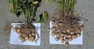 Un système de fertilisation rentable-