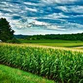 AKRA Blattdüngesystem für Mais-Bild von David Mark auf Pixabay