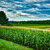 AKRA système de fertilisation foliaire pour le maïs-Picture: David Mark on Pixabay