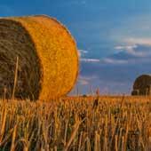 Traitement des résidus de récolte-Image by Robert Balog from Pixabay